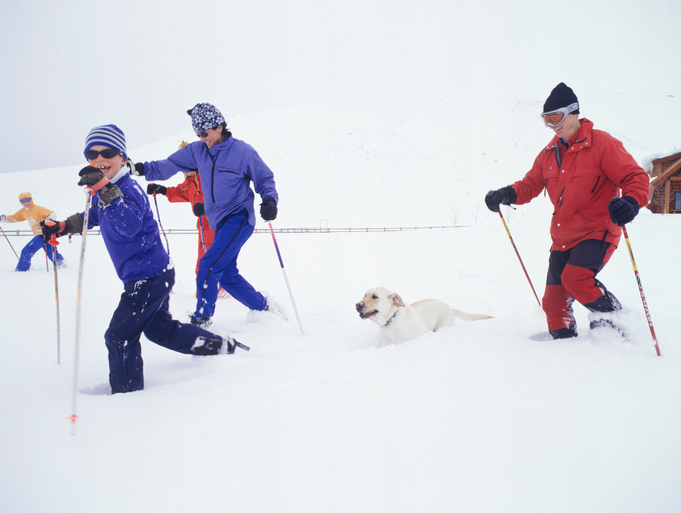 Pet Friendly Rentals Available at Snowshoe Mountain