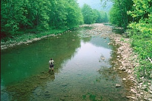First tracts real estate for Elk river wv trout fishing